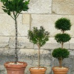 Topiary Collection at The Cloisters