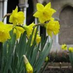 In Bonnefont Cloister garden