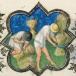 July Activity: Reaping Grain