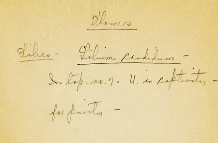 M. Freeman Note on Identification of Lily