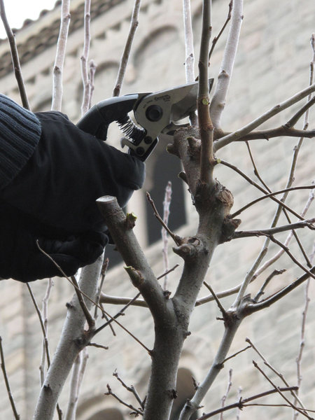 Detail of the pruning