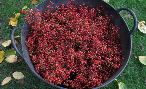 Gathered Rose Hips