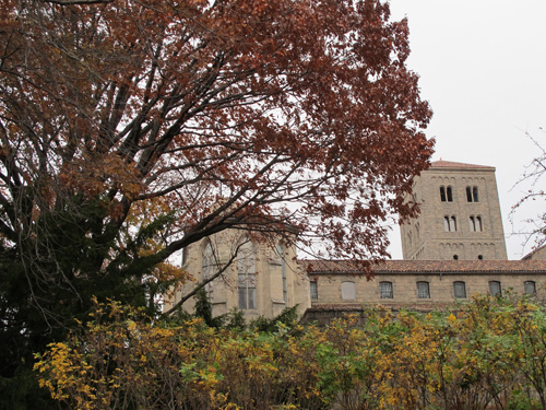 Oak Trees at The Cloisters